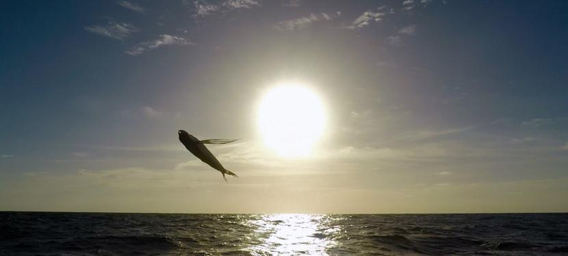 Tag 5 & 6 – FliegendeFische