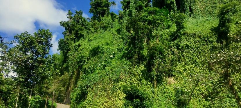 Martinique, das Land desRegenbogens